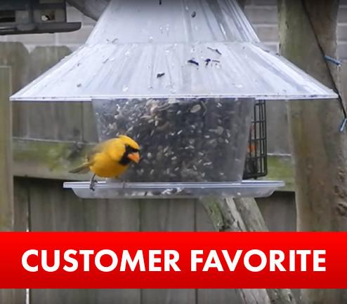 Rare Yellow Cardinal feeding at a Sky Cafe Bird Feeder