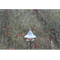 SkyCafe Bird Feeder surrounded by cardinals