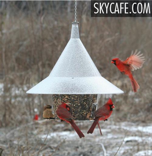 The BEST Cardinal Squirrel Proof Mandarin Birder Feeder