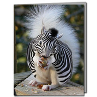 Zebra Squirrel Cards | Boxed Set of 8 | Undiscovered Squirrels