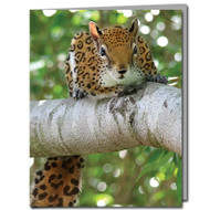 Jaguar Squirrel Cards | Boxed Set of 8 |Undiscovered Squirrels