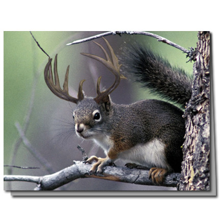 Deer Squirrel Cards | Boxed Set of 8 |Undiscovered Squirrels