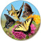 Variety Butterfly Pink Orange Flower Sandstone Ceramic Coaster   Front