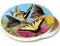 Variety Butterfly Pink Orange Flower Sandstone Ceramic Coaster   Image shows front and cork back