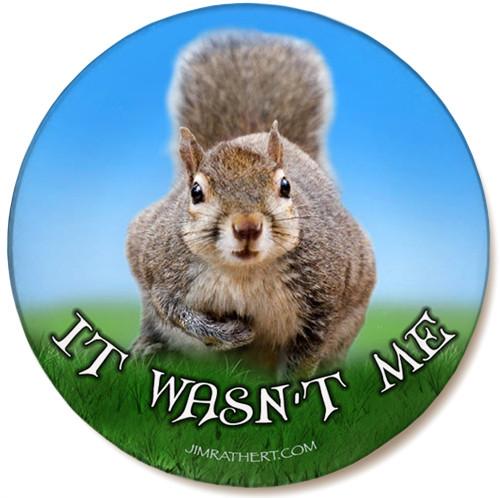 It Wasn't Me Sandstone Ceramic Coaster   Funny Squirrel Coaster   Front