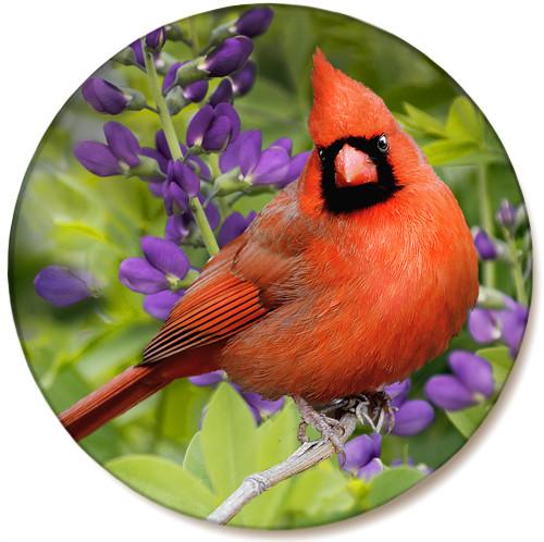 Summer Cardinal Sandstone Ceramic Coaster   Front