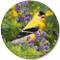 Summer Goldfinch Sandstone Ceramic Coaster   Front