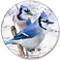 Winter Blue Jay Sandstone Ceramic Coaster | Front