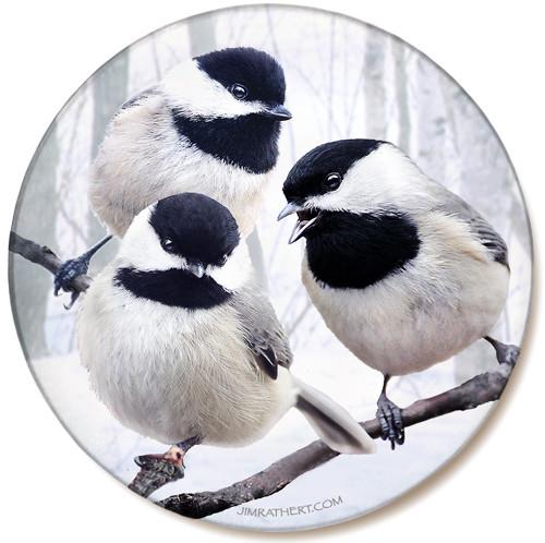 Winter Chickadee Sandstone Ceramic Coaster | Front