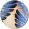 Bluebird Feather Sandstone Ceramic Coaster   Front