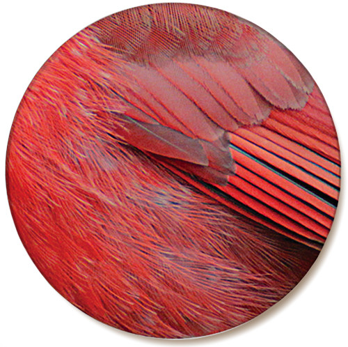 Cardinal Feather Sandstone Ceramic Coaster | Front