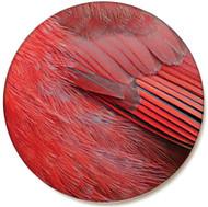 Cardinal Feather Sandstone Ceramic Coaster | Front