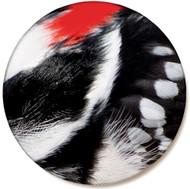 Woodpecker Feather Sandstone Ceramic Coaster | Front