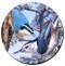 Nuthatch Sandstone Ceramic Coaster | Front