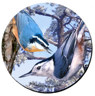 Nuthatch Sandstone Ceramic Coaster | Front
