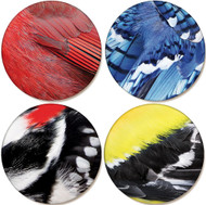 Bird Feather Sandstone Ceramic Coaster Collection (set of 5)