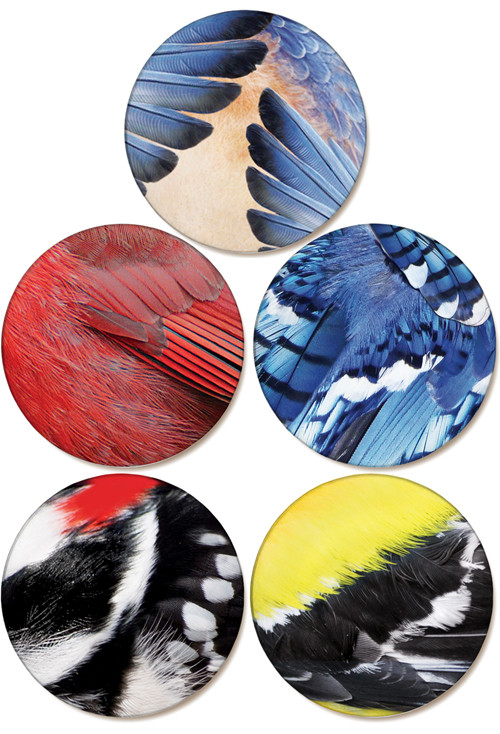 Bird Feather Collection | Sandstone Ceramic Coasters | 4pack