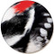 Woodpecker Feather Coaster