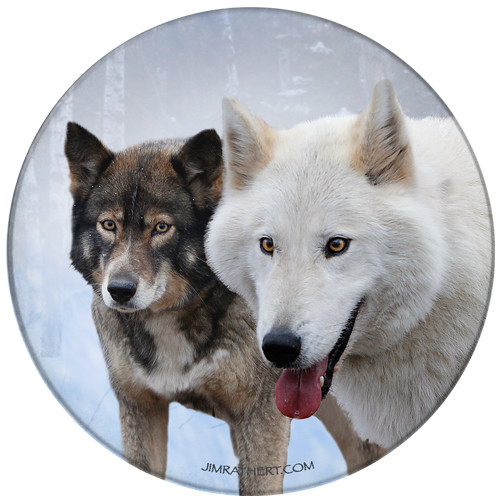 Timber Wolves in Snow Sandstone Ceramic Coaster | Wolf Coaster | Front