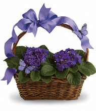 Violets and Butterfies