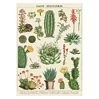 "Cavallini Decorative Paper 20x28"" sheet Succulents"