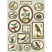 "Cavallini Decorative Paper 20x28"" sheet Birds in Frames"