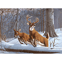Paint by Numbers Kit Large Set White Tails
