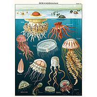 "Cavallini Decorative Paper 20x28"" sheet Oceanography / Jellyfish"