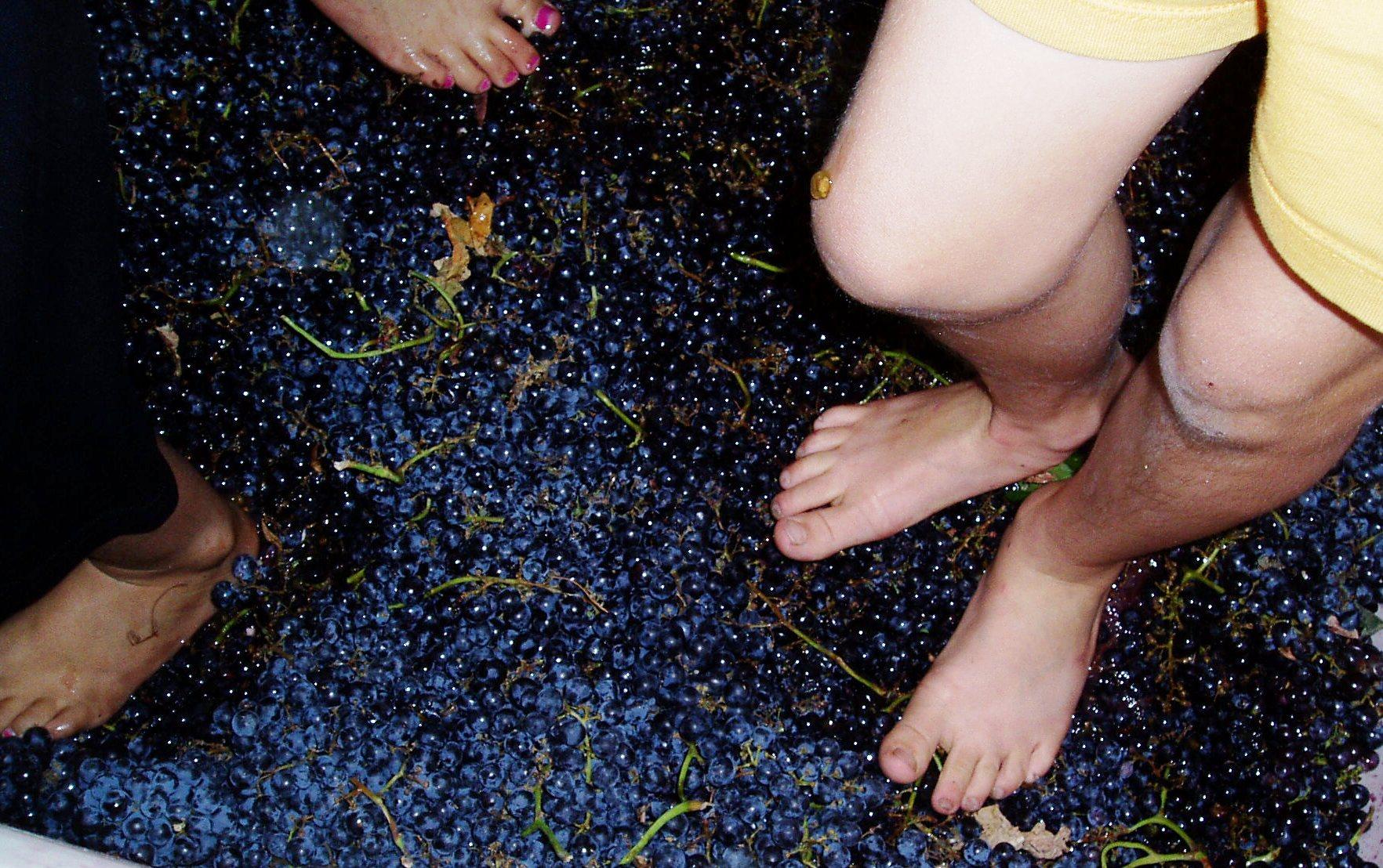 grape-stomping.jpg