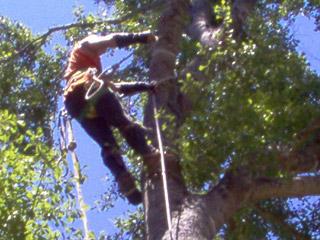 arm-chaps-tree-service-2.jpg