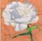 Carnation Flower Block