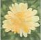 Chrysanthemum Flower Block