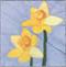 Daffodil Flower Block