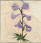Larkspur Flower Block