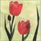 Tulips Flower Block