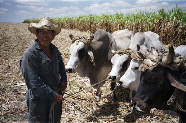 012-cows-3.jpg