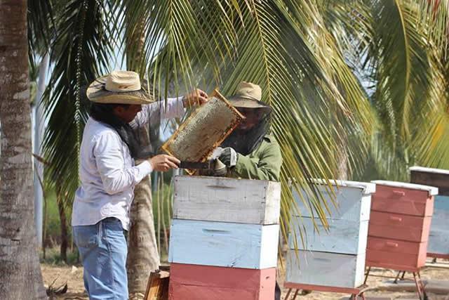 apiary.jpg