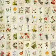 341086 - Pip Studio 3 Botanical Cream Multicoloured Eijffinger Wallpaper Mural