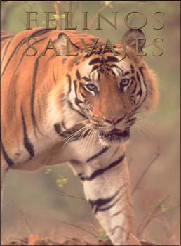 Felinos salvajes - Spirit of the Wild Cat