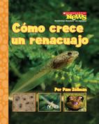 Cómo crece un renacuajo - Tadpole Grows Up