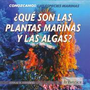 ¿Qué son las plantas marinas y las algas? - What Are Sea Plants and Algae?