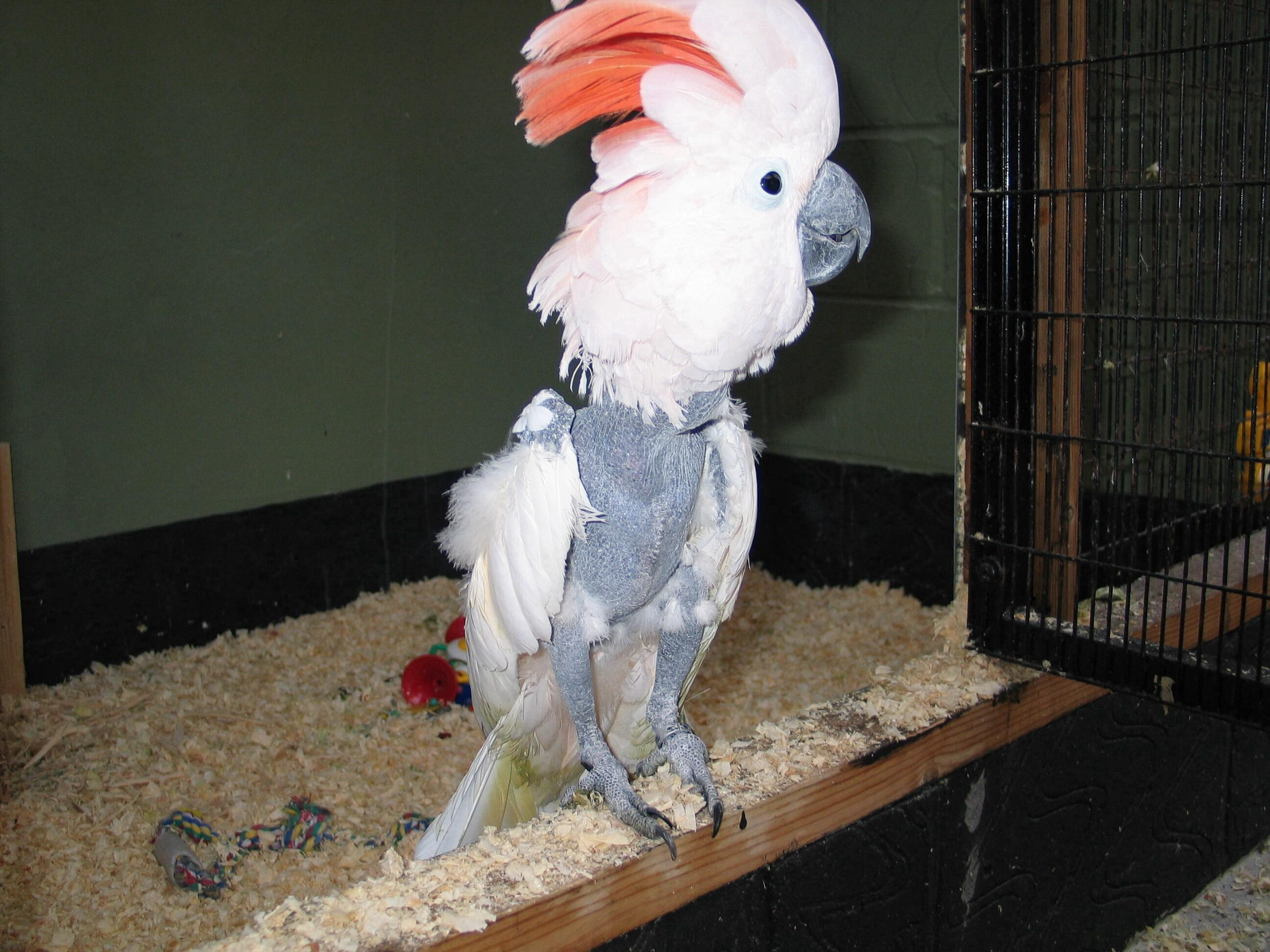 sca-birds-010.jpg