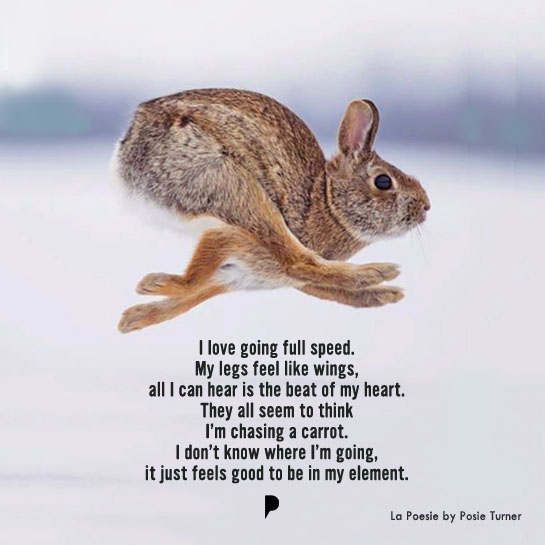 i-am-a-rabbit-la-poesie-by-posie-turner.jpg