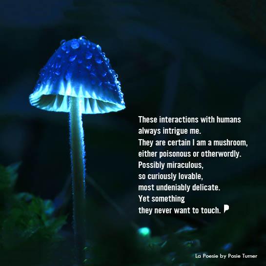 touch-me-i-m-a-mushroom-la-poesie-by-posie-turner.jpg