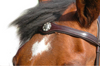 Unique concho-studded browband