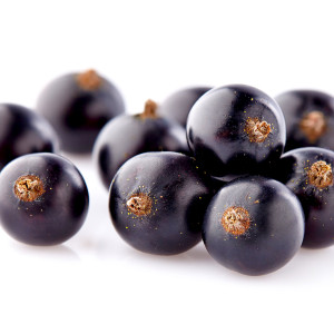 FREEZE DRIED ORGANIC BLACKCURRANTS