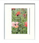 White Framed Print (Medium)