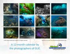 GUE Calendar