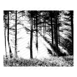 Forest Sun, Impression Obsession Cling Stamps - 845638025663