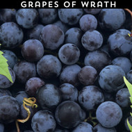 Grapes of Wrath eLiquid